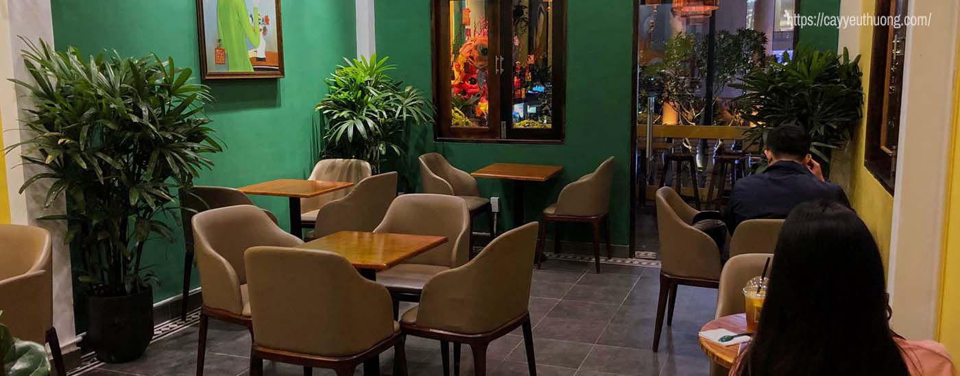Cây - quán cà phê