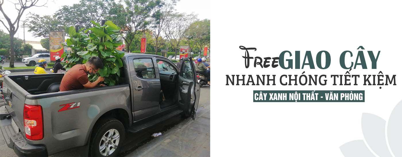 miễn phí giao cây