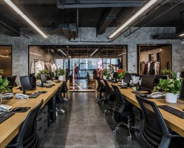 Cây cảnh và nơi làm việc