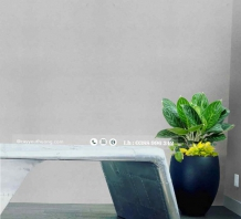 Cây trồng trong nhà - Cây bạch mã hoàng tử (chậu xi măng,đá mài hình đầu đạn)