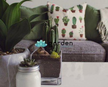 Tác dụng của việc trồng cây cảnh trong nhà